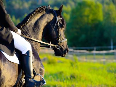 Andiamo a cavallo